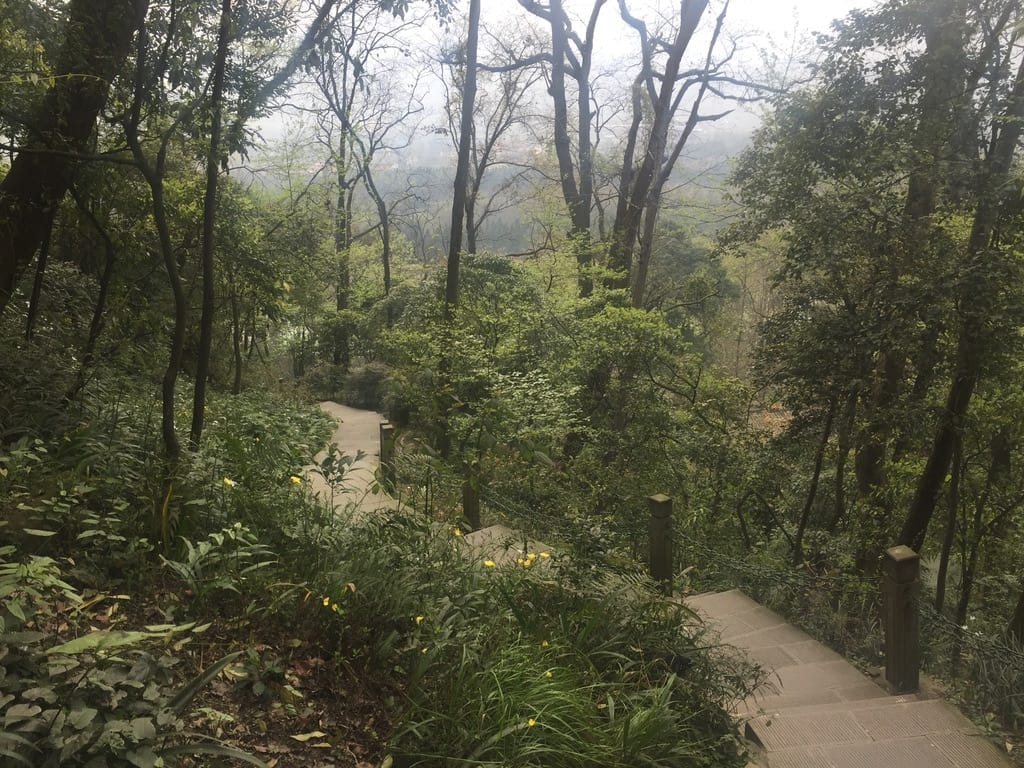 Forested Pathways - Dragons, Myth, and Minjian