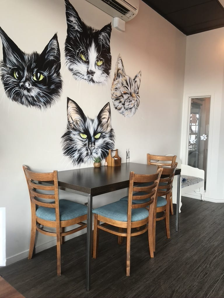 Six unique things to do in Christchurch this winter - Catnap Cat Cafe