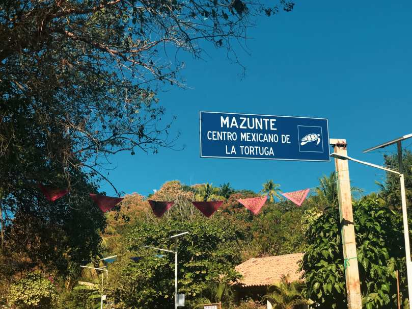 Mazunte is home to the Mexican National Mexican Turtle Center