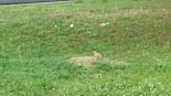 Lots of prairie dogs kept popping up along the way
