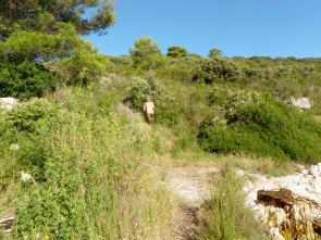 Hiking near Hvar