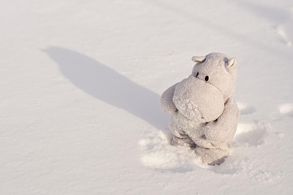 tiny hippo has a