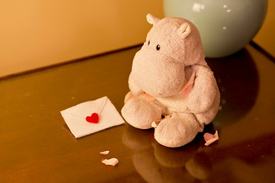 Tiny Hippo Finds a Love Note