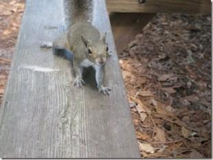 Mooching Squirrels