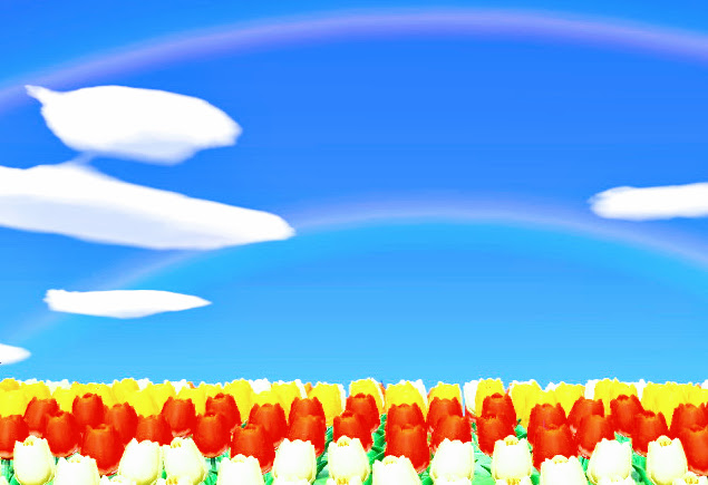 A double rainbow in a blue sky above some colourful tulips