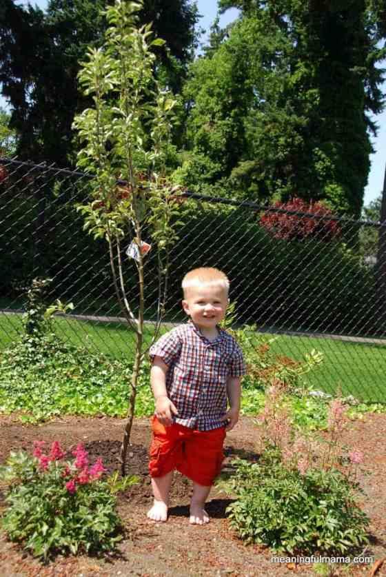 birthday-plant-a-tree