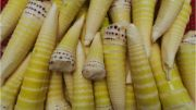 bamboo shoots | vegetable name