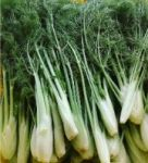 fennel | vegetable name