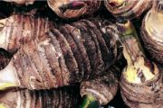 taro root | vegetable name