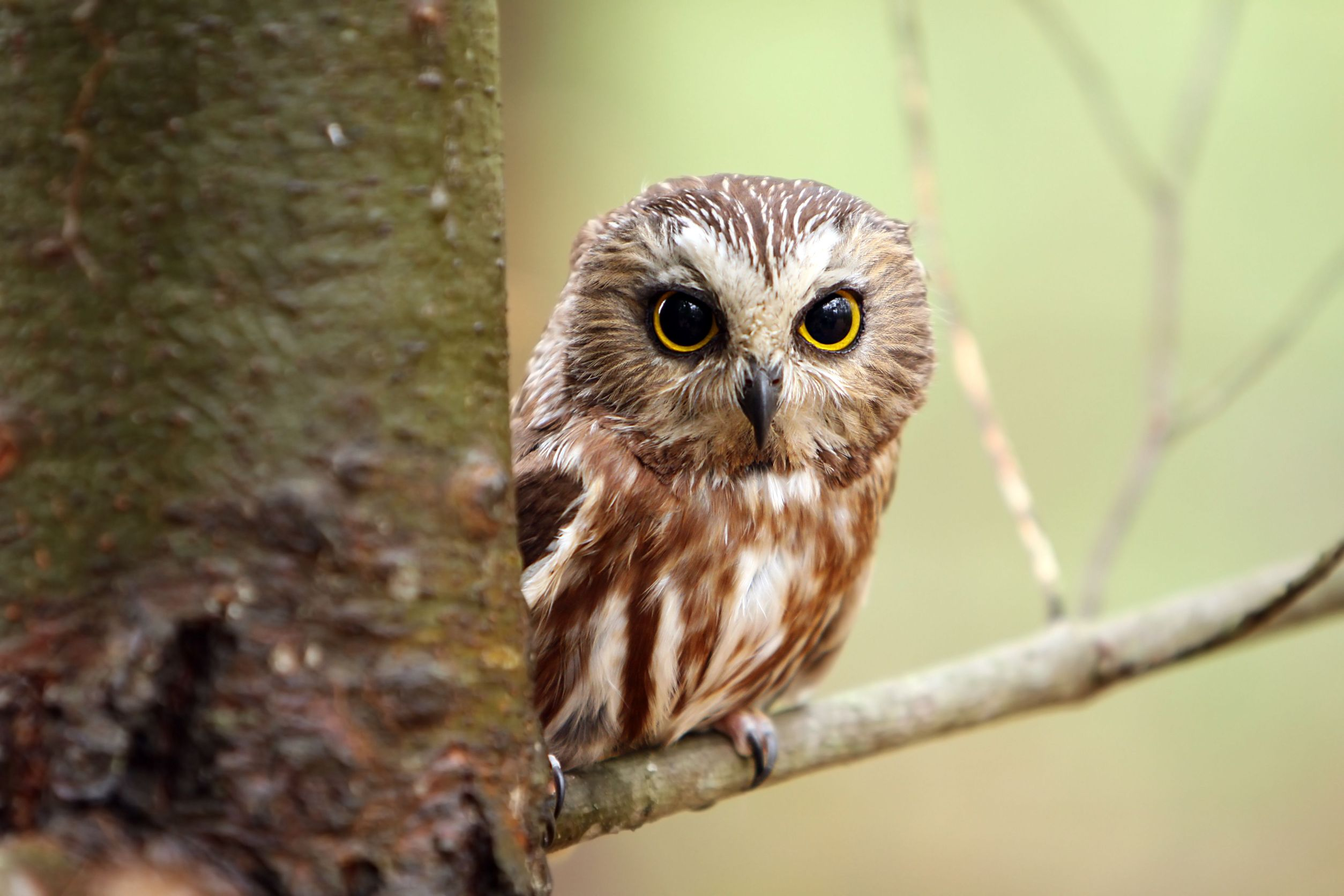 Find an owl feather meaning of feathers biocorpaavc