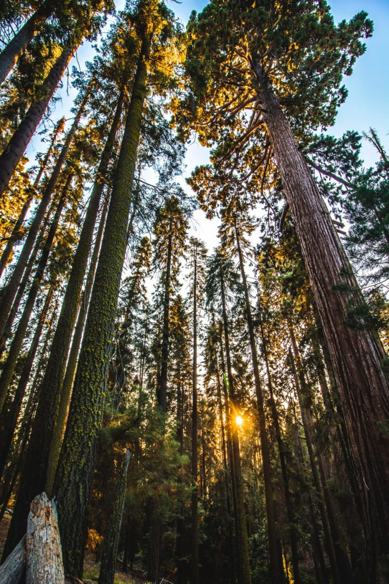 Visiting Lost Countries Sequoia