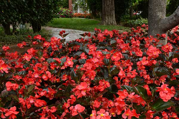 spring annuals - means nursery