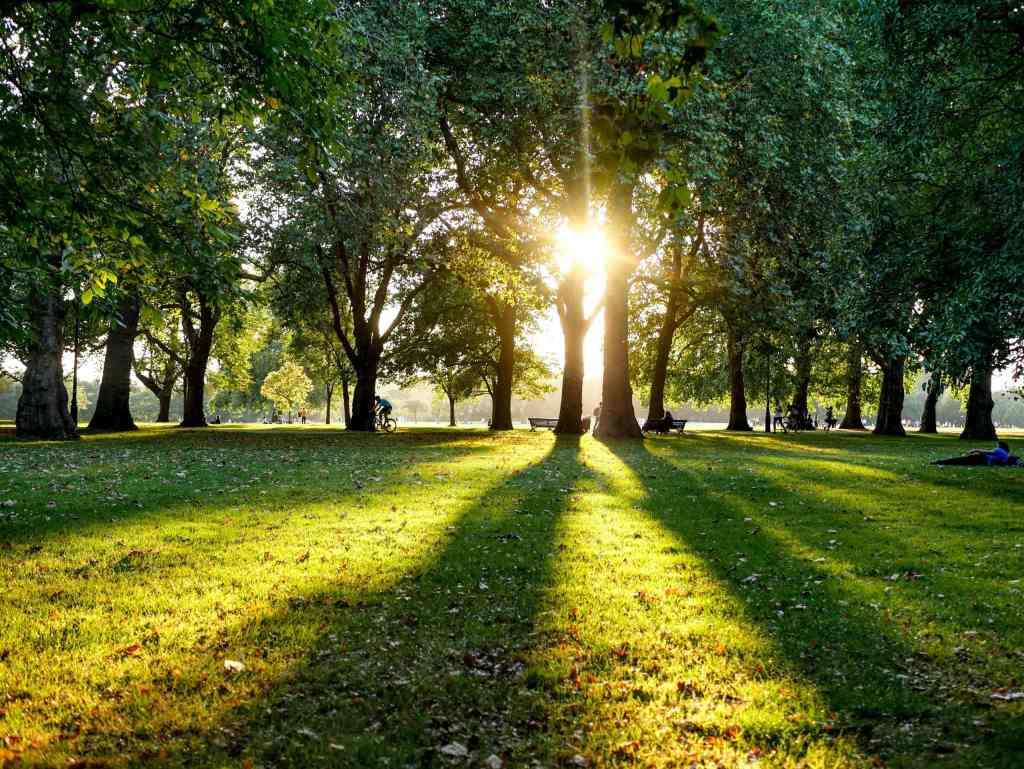 sunshine through the green trees at a park