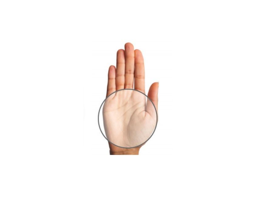 portion size palm