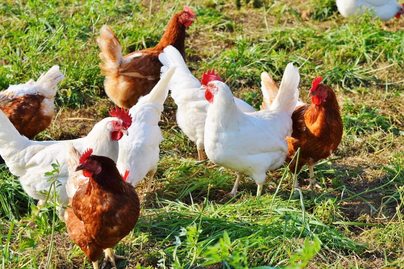 ДПСС нагадує про біобезпеку під час міграції птахів