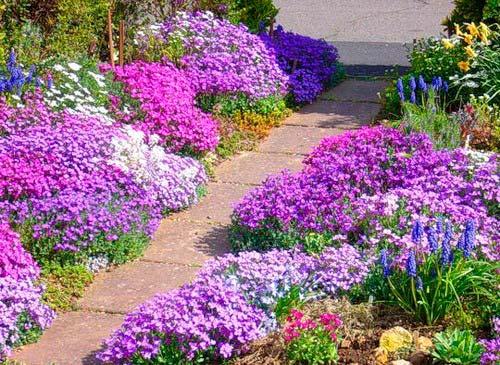 С помощью растений можно красиво оформить садовую дорожку