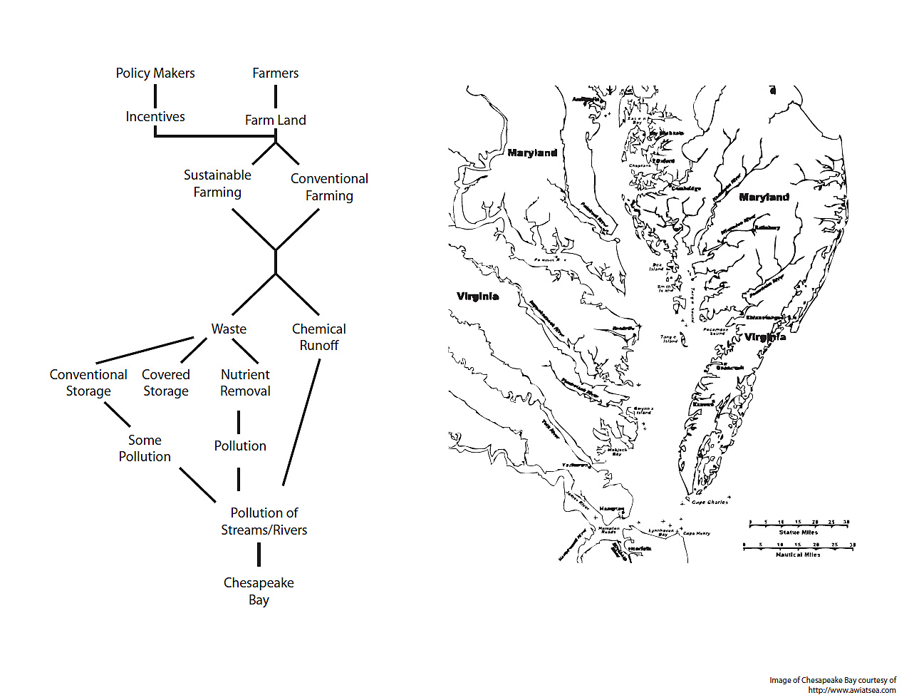 Chesapeake Bay Food Web Diagram