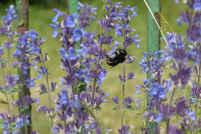 Wildbienen Ansiedeln Cheap Wildbienen With Wildbienen