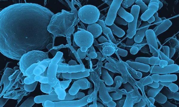 Профилактика кишечных инфекций препараты