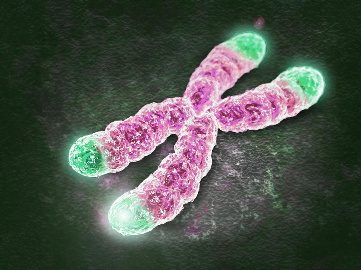 Telomerase Telomeres