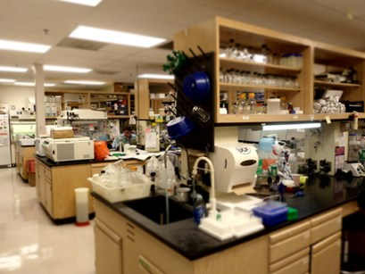 「Department of Molecular Biology and Microbiology and Biomolecular Science Center, Burnett College of Biomedical Sciences, University of Central Florida」の画像検索結果