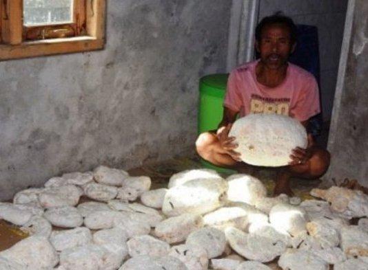 Muntahan paus yang ditemukan nelayan Bengkulu, Sukadi
