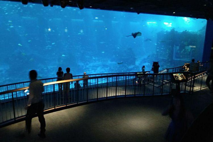 Area open ocean habitat di S.E.A. Aquarium, Singapura(KOMPAS.com/NIBRAS NADA NAILUFAR)