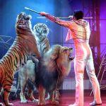 Pawang sedang mengendalikan singa dan harimau dalam pertunjukkan sirkus. Di Skotlandia, pertunjukkan sirkus keliling yang masih menampilkan hewan liar kini dilarang masuk dan menggelar pertunjukkan.(Bertrand Guay / AFP)
