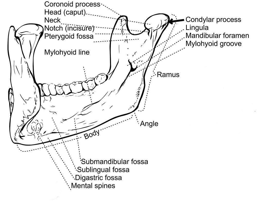 Dental Apparatus: a gallery