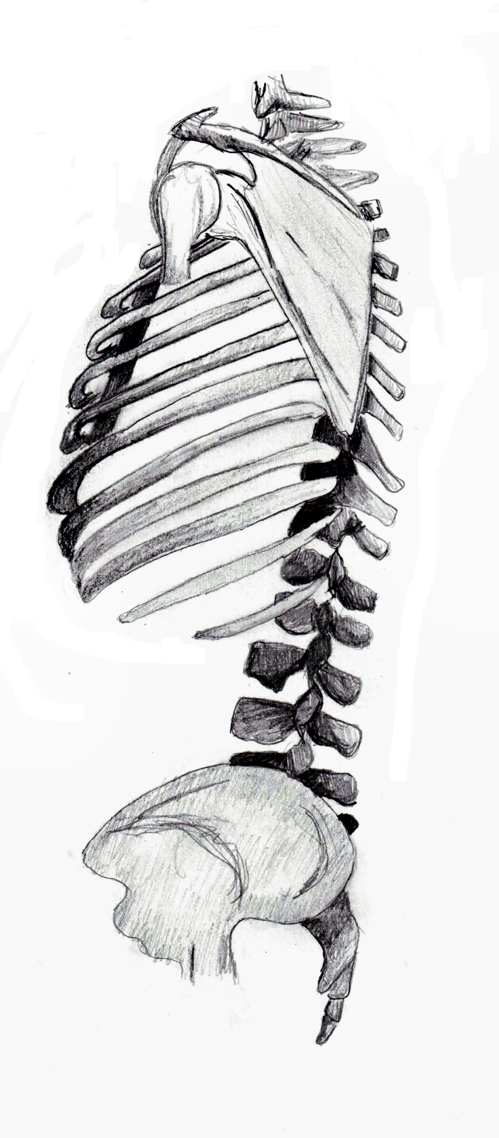pin snakes anatomy diagram labeled on pinterest
