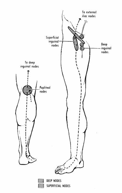lymphatics of lower limb