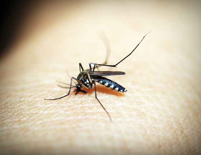 Mosquito is vector for malarial infection