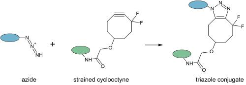 small resolution of the advantages provided by click chemistry facilitate a wide range of applications such as specific affinity or fluorescent labeling linking molecules to