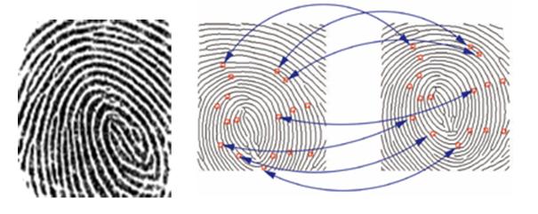 Fingerprints Dry Skin Done