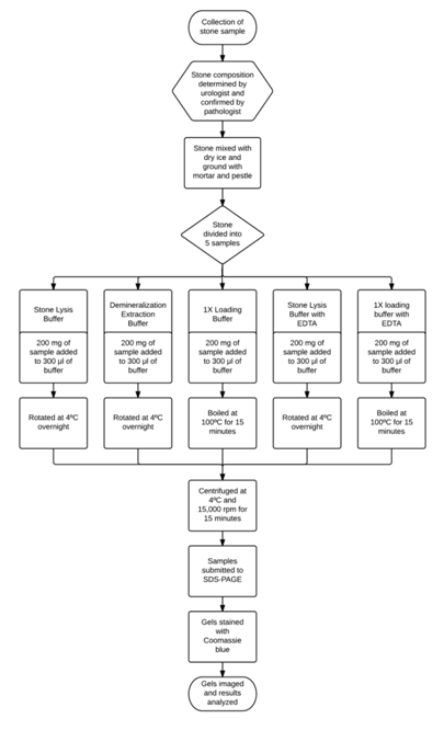 Analysis of Methods for Extracting Matrix Proteins from