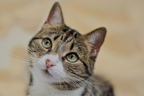 cat-1646566_1920