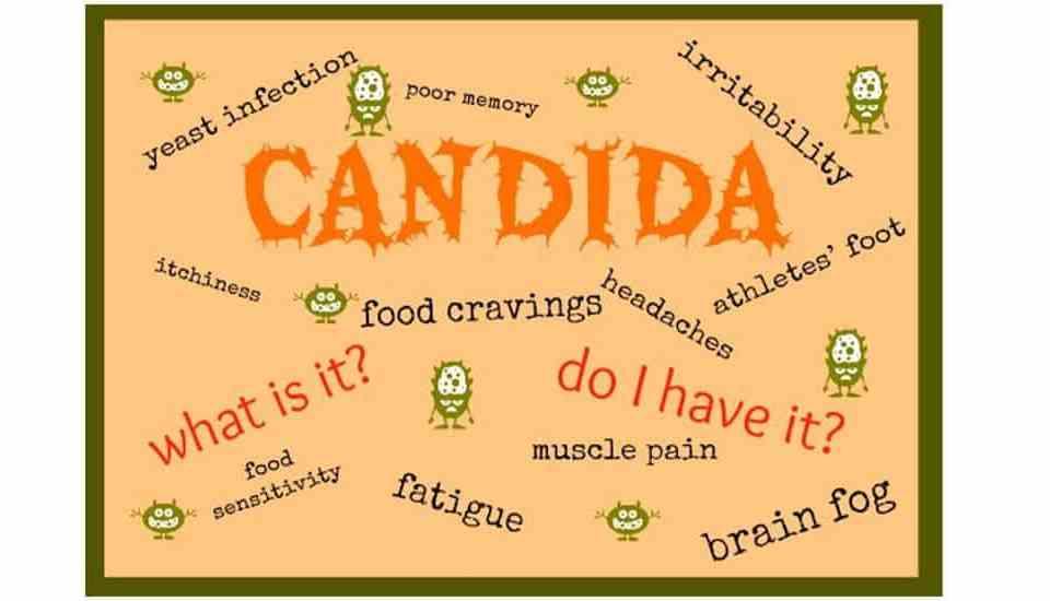 Candida Medek