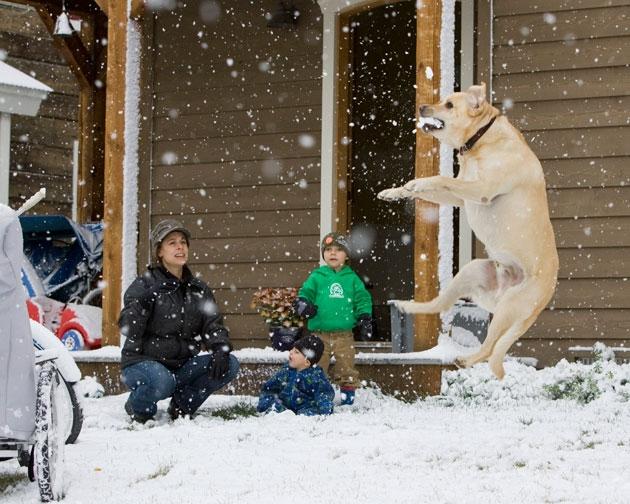 Este es un perro loco mordiendo la nieve. Kim Dunn, sus hijos y su perro juegan con la nieve frente a su casa en Crested Butte, Colorado, el lunes 21 de septiembre de 2009. Foto AP / Nathan Bilow