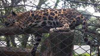 Medellin Zoo: Exploring the Zoologico de Santa Fe