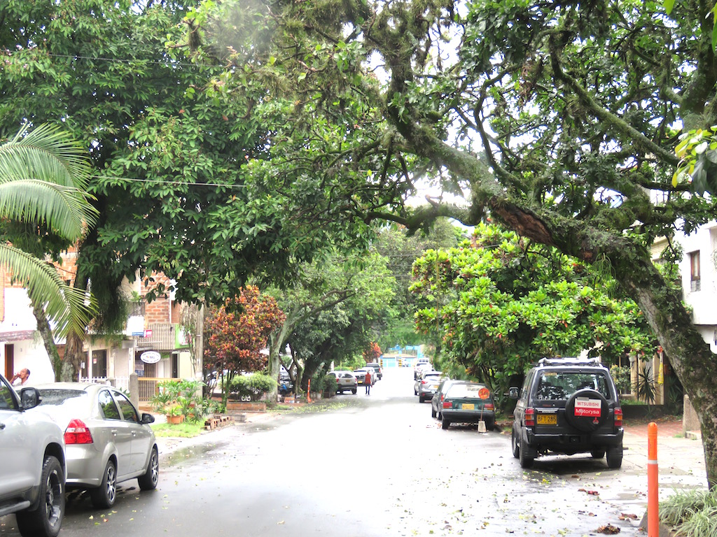 Tree lined street in Manila barrio