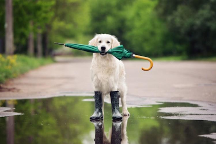 How often does it rain?