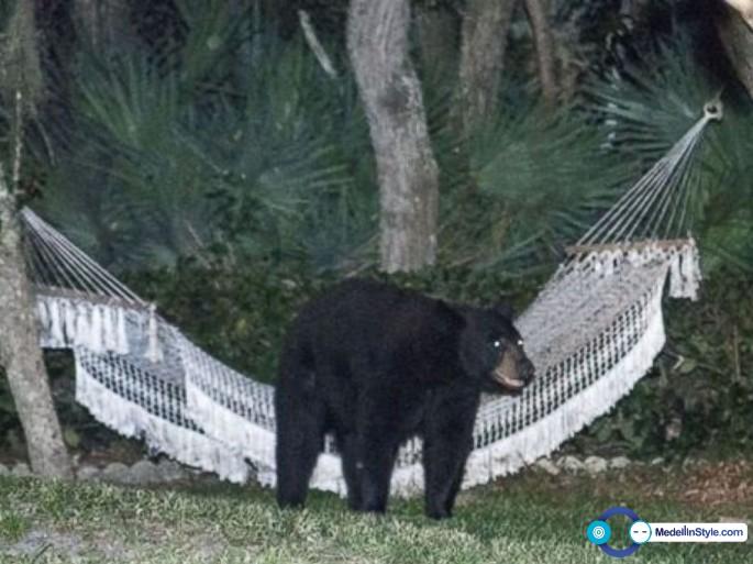 HT_bear_hammock_daytona_beach_rafael_torres_5_jt_140531_4x3_992