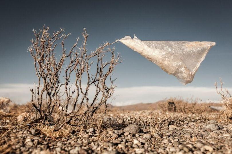 Plastic tree, Bolivia Photograph: Eduardo Leal/Courtesy of Atkins CIWEM Environmental Photographer of the Year