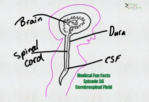 Examining Cerebrospinal Fluid Medical Fun Facts Gary Lum