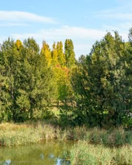 Autumn peeking
