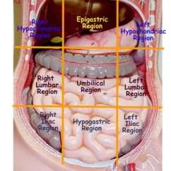 Where Are Your Appendix Located Diagram 2001 Vw Beetle Parts Abdominal Regions | Med Health Daily