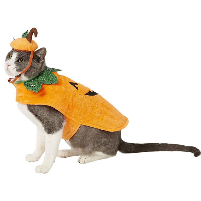 It'd be great for a mischievous duo who will more than likely be up to trouble when the ghosts and goblins come out in the evening. Cute Alert 10 Cat Halloween Costumes For Your Favorite Feline Bechewy