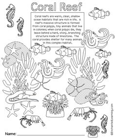 Pin Coral Reef Diorama on Pinterest
