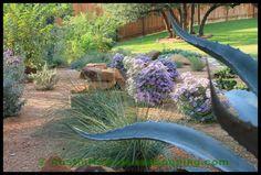 design central texas landscaping