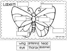 Leaf Anatomy Diagram Coloring Worksheet, Leaf, Free Engine